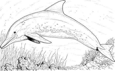 river dolphin coloring page free coloring pages of river dolphin