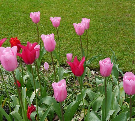 Seprei Tulip Pink 3 Uk 160x200 pink