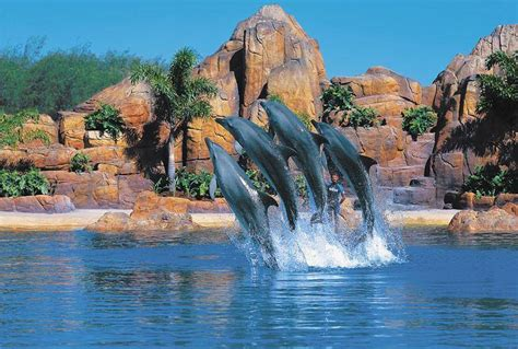 themes gold coast the finest theme parks and wildlife sanctuaries in australia