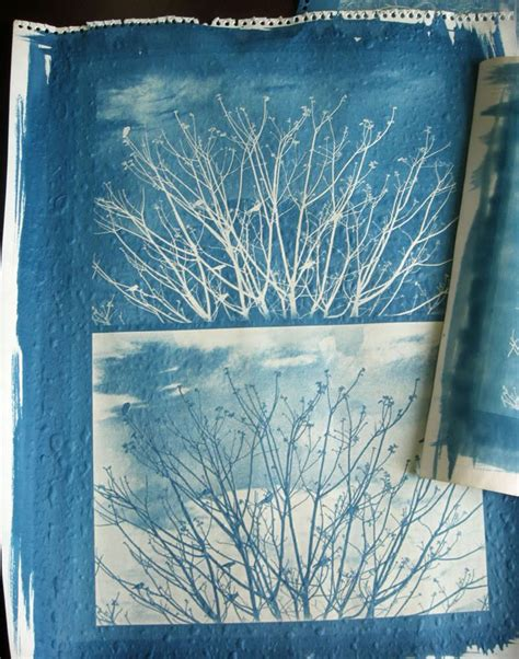 How To Make Cyanotype Paper - the 25 best cyanotype process ideas on