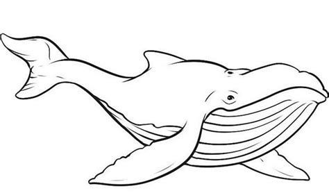 picture of blue whale coloring page netart