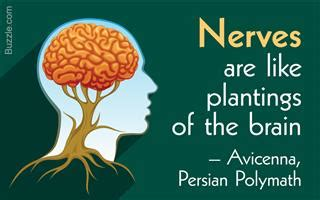 the solar plexus or abdominal brain classic reprint books structure and function of the nucleus accumbens explained