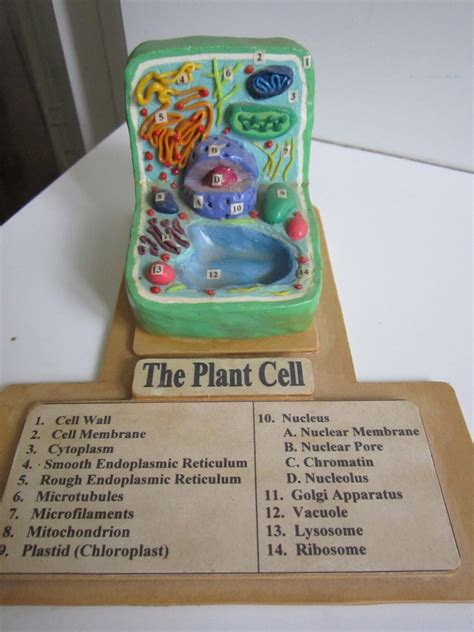 3d plant cell diagram project plant cell clay model search cells