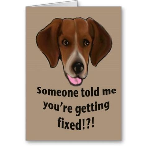 vasectomy for dogs 17 best ideas about get well cards on feel better cards friend