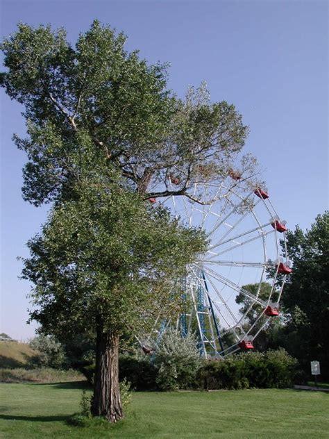buffalo wy  ferris wheel  graced  utah