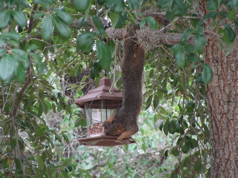 finding a squirrel deterrent for bird feeders effective