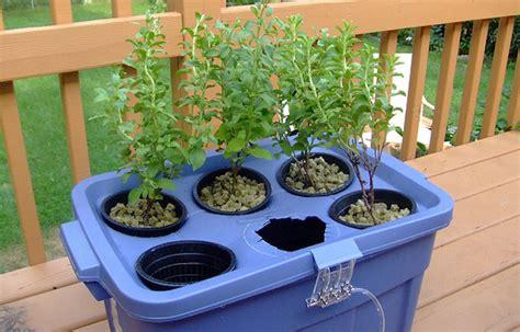 coltivazione idroponica in casa coltivazione idroponica in casa
