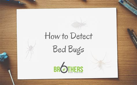 detect bed bugs   property