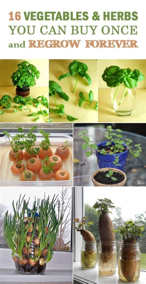 7 vegetables you can regrow 1000 images about gardening on garden gates