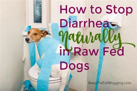 how to stop diarrhea in dogs how to stop diarrhea naturally in fed dogs keep the wagging