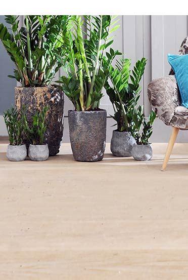 Bambus Pflanzen Garten 1151 by Pflanzen Kaufen Bei Obi Obi Ch