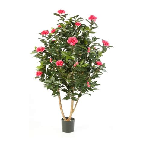 Alq 13 Set Kulot White Camelia artificial camellia japonica tree with pink or white flowers