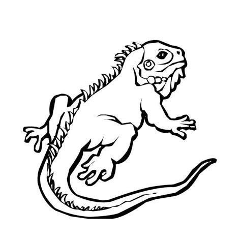 imagenes para pintar iguana desenhos para colorir de animais selvagens iguana