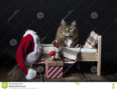 cat getting into bed stock photo image 72709058