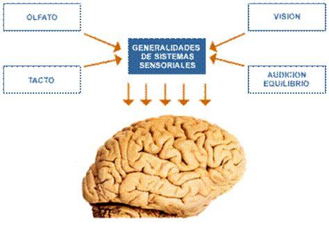 imagenes de umbrales sensoriales umbral sensorial
