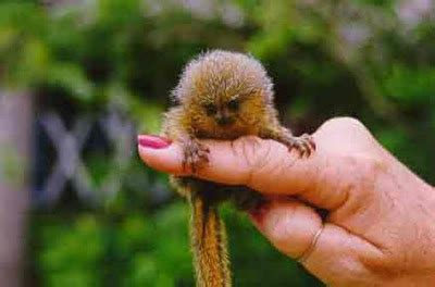 very small monkeys | bragg live food products