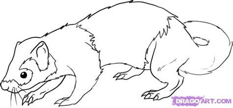 how to draw a ferret step by step pets animals free