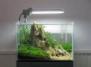 best 25 nano aquarium ideas on freshwater