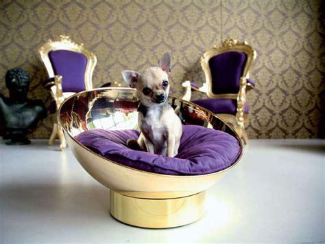 letti a forma di animali cucce e letti per cani e gatti foto tempo libero pourfemme