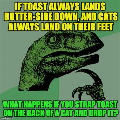 Cat Toast Meme - cat toast meme 28 images funny cat toast bread face on