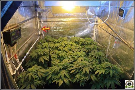 como colocar  utilizar  ventilador grande en cultivos de marihuana