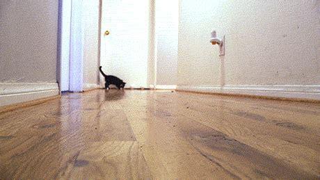 carlton sliding across floor gif fast furriest tokyo drift cat gifs