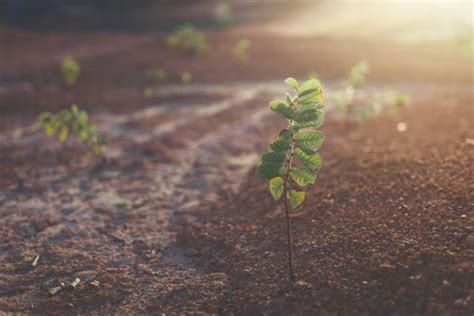 green leafy plant starting  grow  beige racks  stock photo