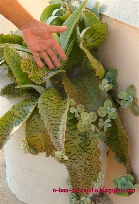 exotische pflanzen kaufen 906 443 besten plants bilder auf exotische blumen