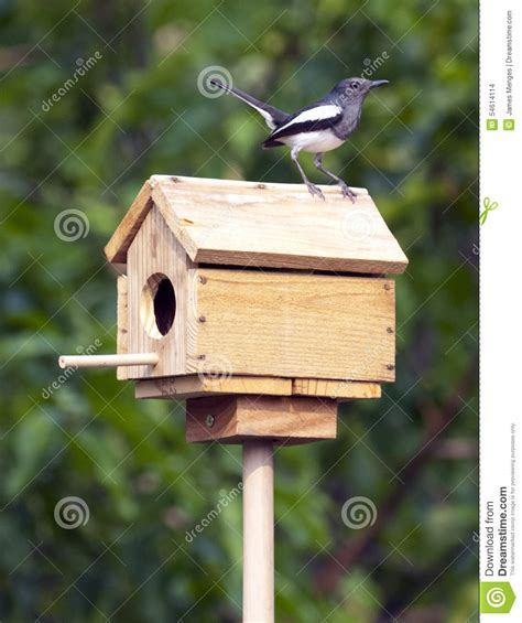 magpie house design oriental magpie robin stock photo image 54614114