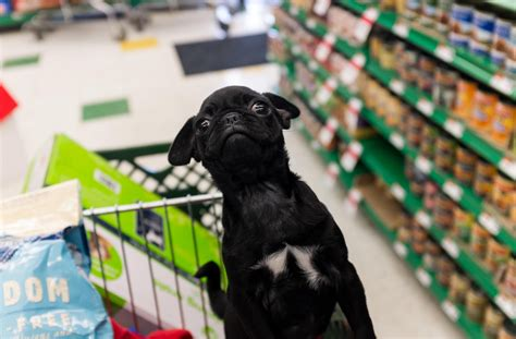 pug shopping about pug pugs pugs pug stories all pugs