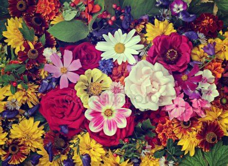 flower free flowers photos free flowers stock photos flower background stock photos royalty free flower