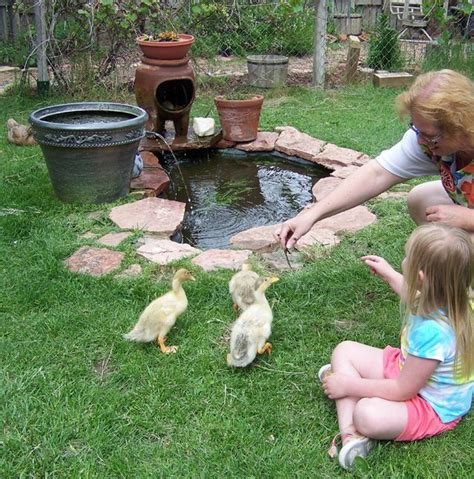 best backyard ducks backyard duck pond www pixshark images galleries
