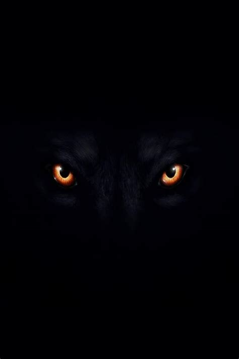 5 11 Black Wolf Black black wolf with wallpaper