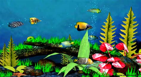 3d live fish wallpaper for pc 3d fish wallpaper desktop amazing wallpapers