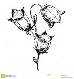 bell flower sketch illustration stock photos image 33305113
