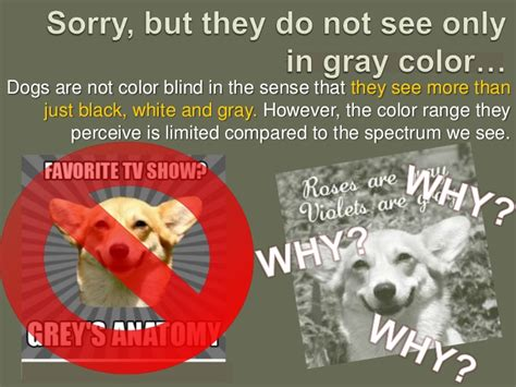 dogs color vision are dogs color blind
