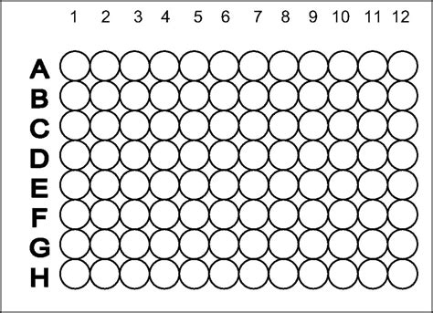 96 well plate template madinbelgrade