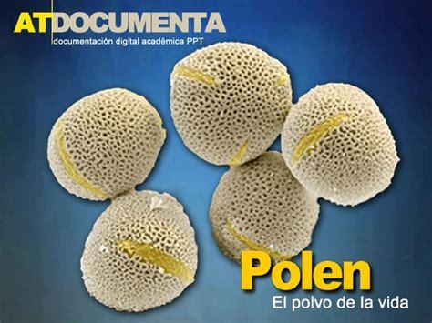 La Vida Organica Polvo Detox by Polen El Polvo De La Vida