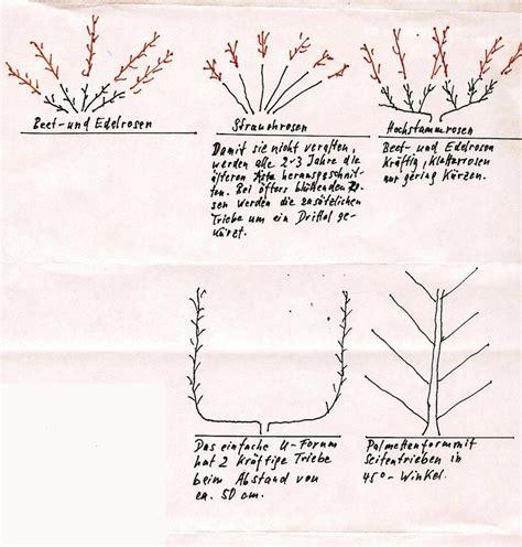 Bodendeckerrosen Schneiden by Rosenschnitt Rosa