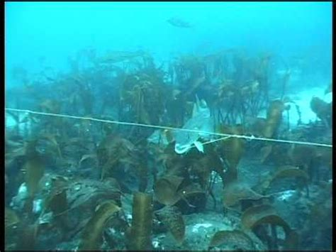 underwater camera from longline fishing of cod youtube