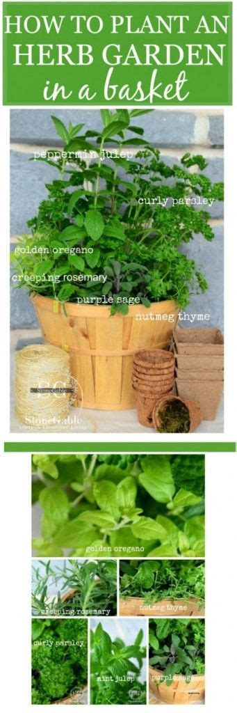 indoor kitchen herb gardens just in time for spring best 25 kitchen herb gardens ideas on pinterest