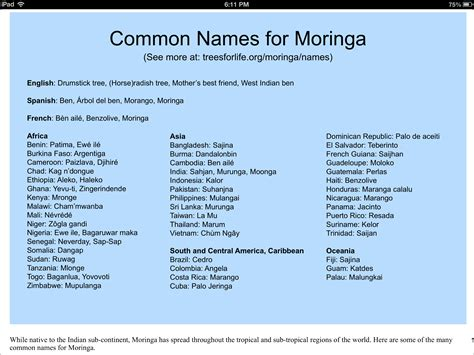 common names common names of moringa oleifera moringa movement