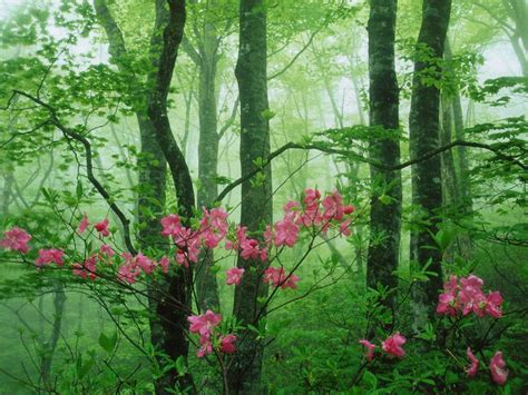 spring gardens spring xcitefun net