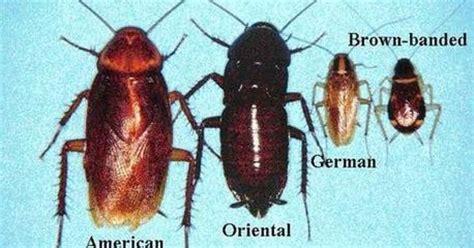 scarafaggi volanti sognare scarafaggi volanti