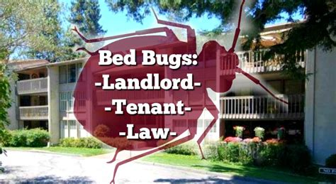 bed bug lawyer bed bug extermination san diego