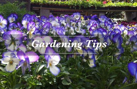 Garden Center San Francisco by Garden Center San Francisco Ca House Plants