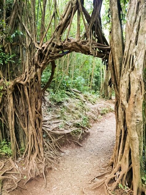Wedding Arch Oahu by Oahu Arches And On