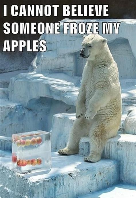 Polar Bear Meme - 25 funny animal memes to make you laugh till you drop