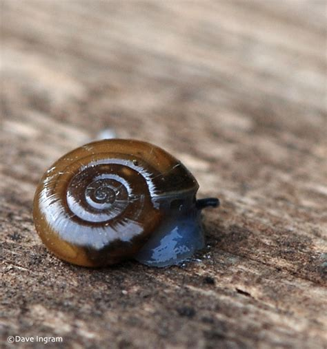 how to find a snail in your backyard how to find a snail in your backyard 28 images some