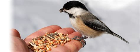 bird feed kalshea commodities inc